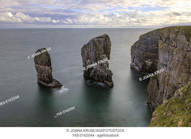 Elegug Stacks, Tenby, Pembrokeshire, Wales, UK, Europe