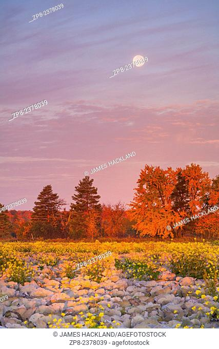 A field of red cabbage adds some extra colour to this already vibrant scene. Richmond Hill, Ontario, Canada