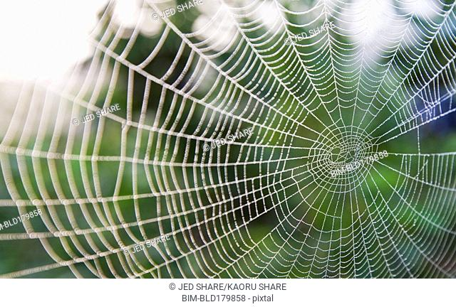 Close up of spider web