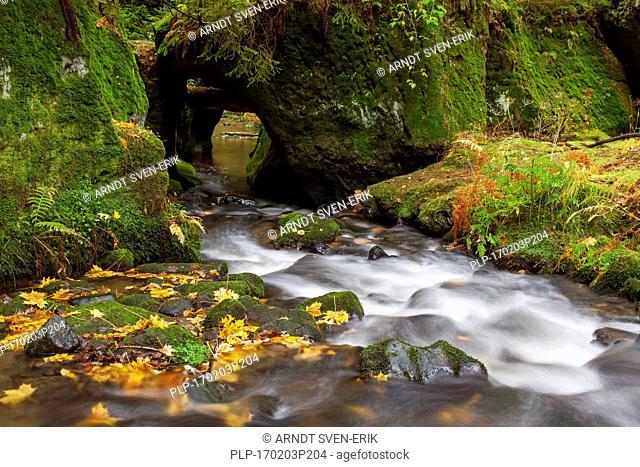 Kirnitzsch / Kirnischt river, tributary of the River Elbe flowing through the Khaa valley / Khaatal / Kyjovske údoli, Bohemian Switzerland National Park