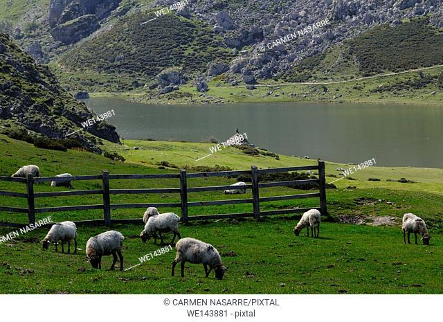 Lake La Ercina, Covadonga