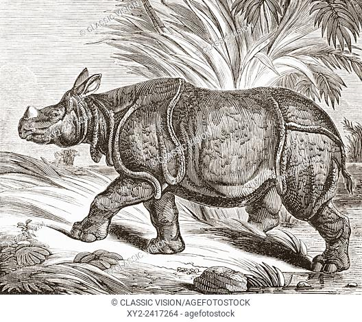 The Indian rhinoceros, aka the greater one-horned rhinoceros and Indian one-horned rhinoceros. Rhinoceros Unicornis. From The Penny Magazine, published 1834