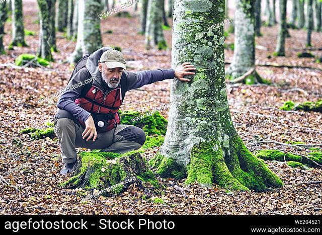 Hiker man in a beechwood looking for mushrooms. Urbasa-Andia Natural Park. Navarre, Spain, Europe