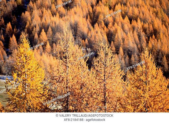 Col de la Cayolle, Haute Vallée du Var, Parc National du Mercantour, Alpes-Maritimes, Provence-Alpes-Côte d'Azur, France