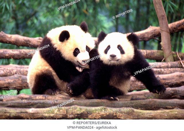 Pandas from China; pandas de Chine; Reporters / EUREKA