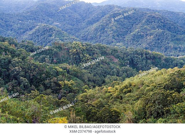 Mountains and forest. Flores island. Indonesia, Asia