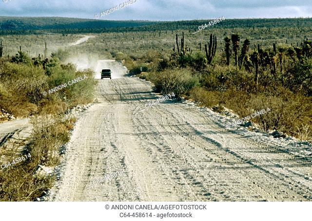 El Vizcaíno Biosphere Reserve. Baja California, Mexico