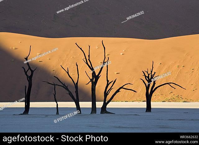 Africa, Namibia, Deadvlei, Dead trees