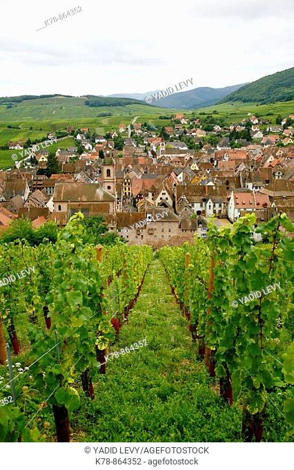 Sep 2008 - View over the village of Riquewihr and vineyards in the Wine Route area, Alsace, France