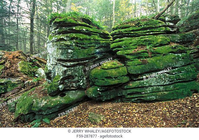 Landscape. Beartown State Park. Monongahela National Forest. West Virginia. USA