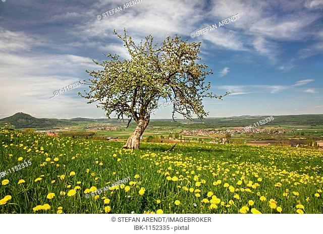 Spring in Hegau, Hegau volcanoes, Maegdeberg, Hohenhewen, Baden-Wuerttemberg, Germany, Europe