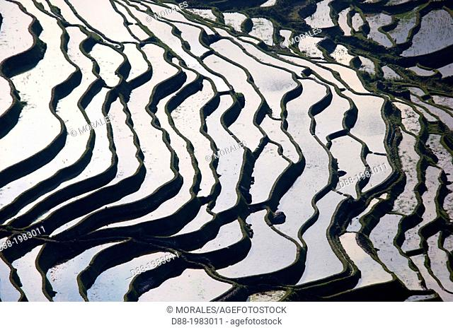 China , Yunnan province , Hani people, Yuanyang , Quanfuzhuang village, rice terraces ,
