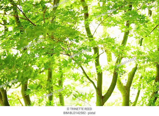Sun shining through leaves on tree