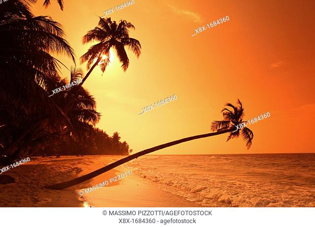 Palm on the beach at sunset, Biyadhoo island, Maldives