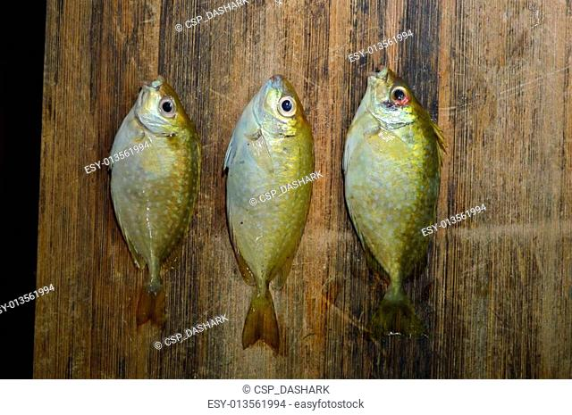 Rabbit Fishes on wood