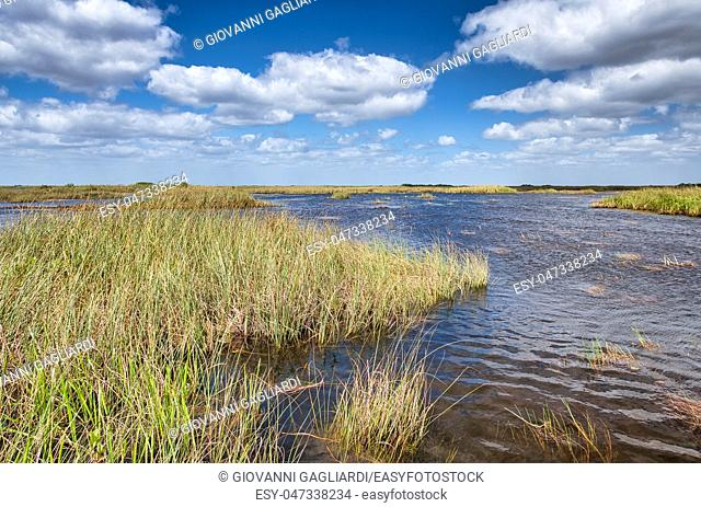 Swamps of Florida Everglades on a beautiful sunny day