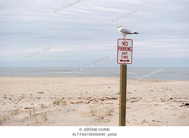 Gull perched on no parking sign on deserted beach