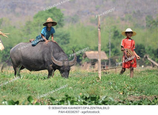 Two boys play with a water buffalo near Indaing, Myanmar, 06 April 2013. Photo: Sebastian Kahnert | usage worldwide. - Amarapura/Birma