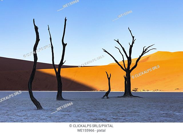 Dead Vlei, dead Acacia trees in the Namib desert at sunrise, Namibia. Africa