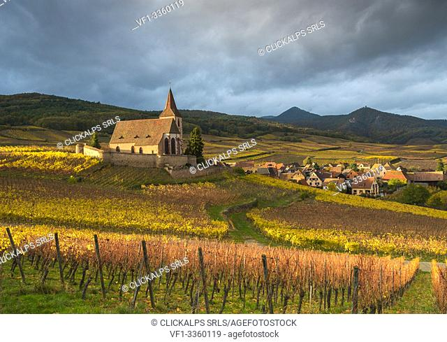 Golden light at the 15th century church of St. Jacques surrounded by the vineyards of Grand Cru in Hunawihr, Alsace, France Europe