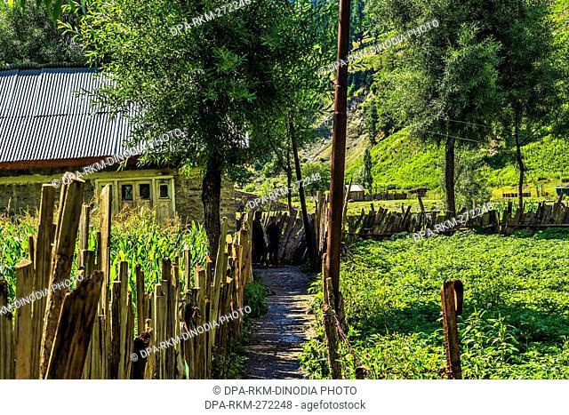 Sheikhpura Chorwan village, Gurez, Bandipora, Kashmir, India, Asia