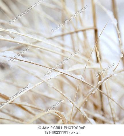 USA, New York State, Rockaway Beach, frozen grass, close-up