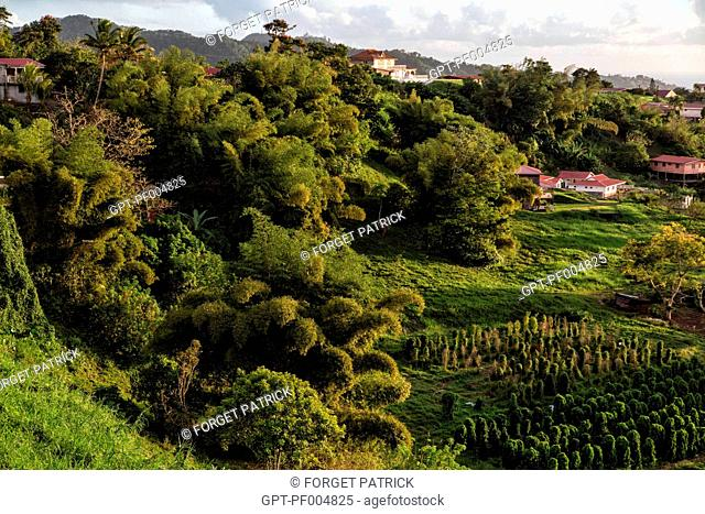 TROPICAL VEGETATION AND THE VILLAGE'S HAMLET, LE MORNE ROUGE, MARTINIQUE, FRENCH ANTILLES, FRANCE