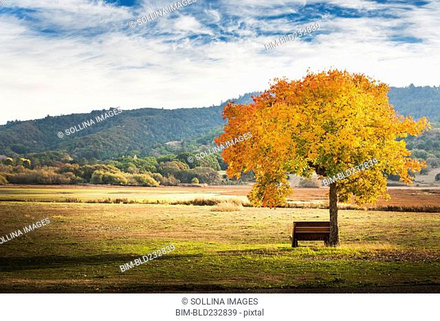 Bench under autumn tree in field