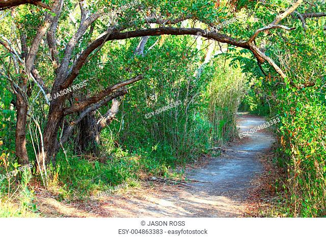 Everglades National Park Trail