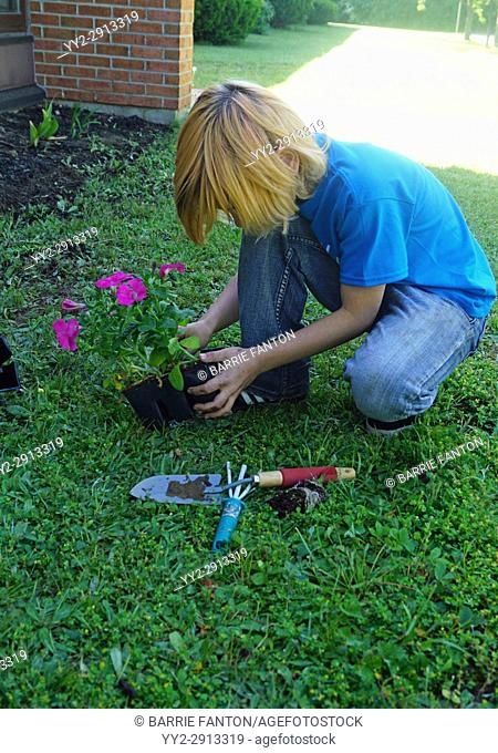 Middle School Boy Planting Flowers at Nursing Home for Community Service Day, Wellsville, New York, USA