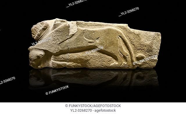 Alaca Hoyuk - Hittite lion sculptures corner Stone. . Andesite. Alacahoyuk, 1399 - 1301 B. C. Anatolian Civilisations Museum, Ankara, Turkey.