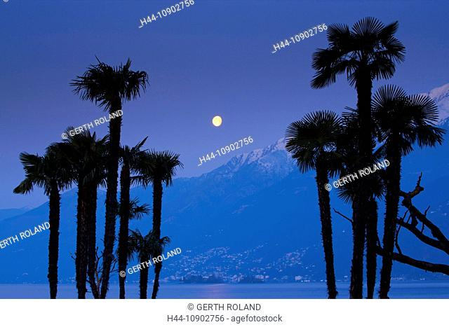 Ascona, Switzerland, Europe, canton, Ticino, Lago Maggiore, night, moon, full moon, trees, palms