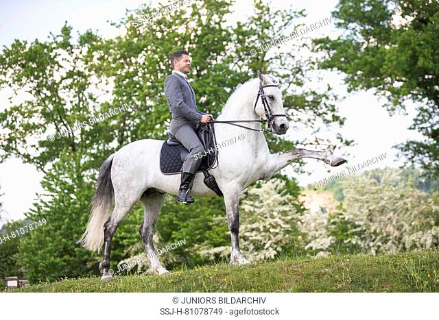 Pure Spanish Horse, Andalusian. Blind gelding performing a Spanish Walk with its rider and owner Sandro Huerzeler. Switzerland