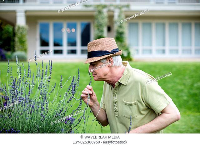Senior man smelling lavender