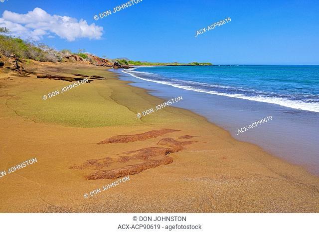 Olivine beach near Punta Cormorant, Galapagos Islands National Park, Floreana Island, Ecuador