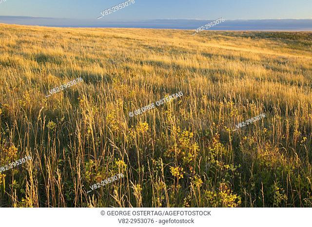 Prairie grassland, Theodore Roosevelt National Park-North Unit, North Dakota
