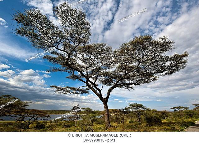 Tree with clouds, Lake Masek, Ndutu area, Tanzania