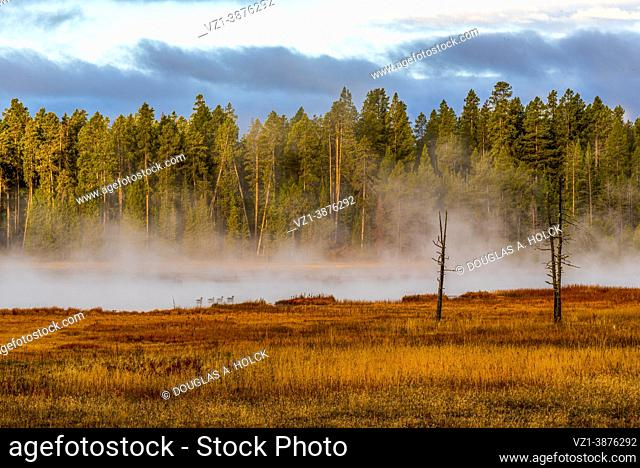 Ducks Cruising in Early Morning on Firehole River in Yellowstone NP MT USA World Location