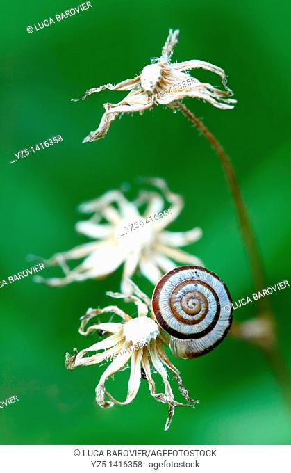 Snail on dead flowers