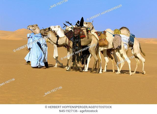Tuaregs with her Camels; Tuareg Caravan; Libyan Arab Jamahiriya; Libyan Desert
