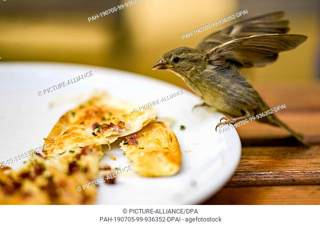 05 July 2019, Hamburg: After a shower of rain in a Hamburg café, a sparrow eats the remains of a flaming cake left on a plate. Photo: Axel Heimken/dpa