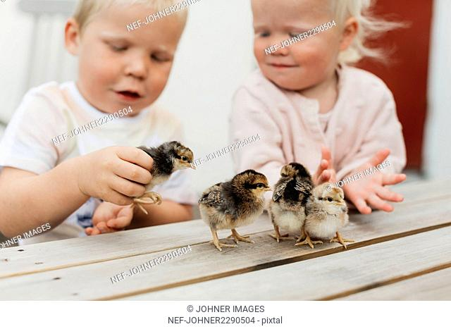 Children playing with chicks