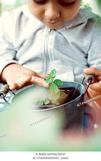 Child holding mint plant