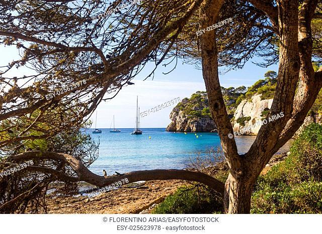 Macarella beach seen among the trees on a sunny morning, Minorca, Menorca, Balearic Islands, Spain
