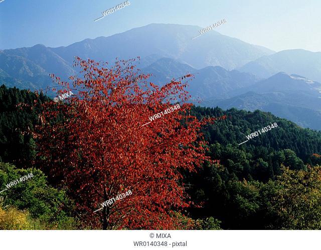 Mount Ena, Nakatsugawa, Gifu, Japan