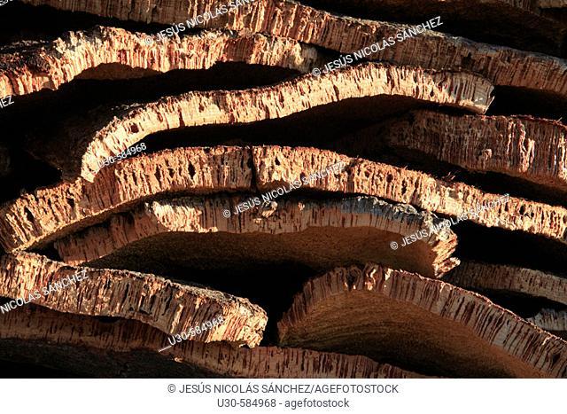 Cork oak (Quercus suber). Valdelosa, Salamanca province, Spain