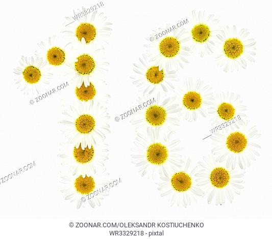 Arabic numeral 16, sixteen, from white flowers of chamomile, isolated on white background