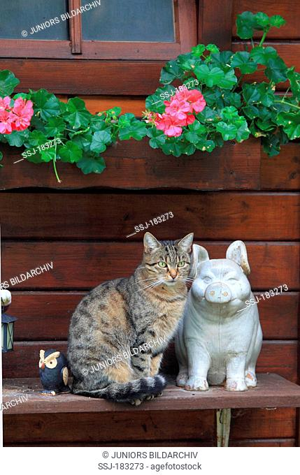 Domestic cat sitting among garden statues (happy pig and owl). Germany