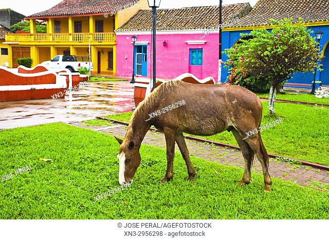 Horse grazing, Tlacotalpan city or town, UNESCO, World heritage site, State of Veracruz, Mexico, Central America