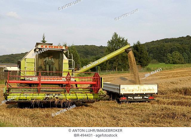 Oat harvest, North Rhine-Westphalia, Germany